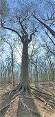 Waterworks Park tree Arbor Day April 2021