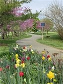 Naval Academy Stadium Trail flowers April 2021